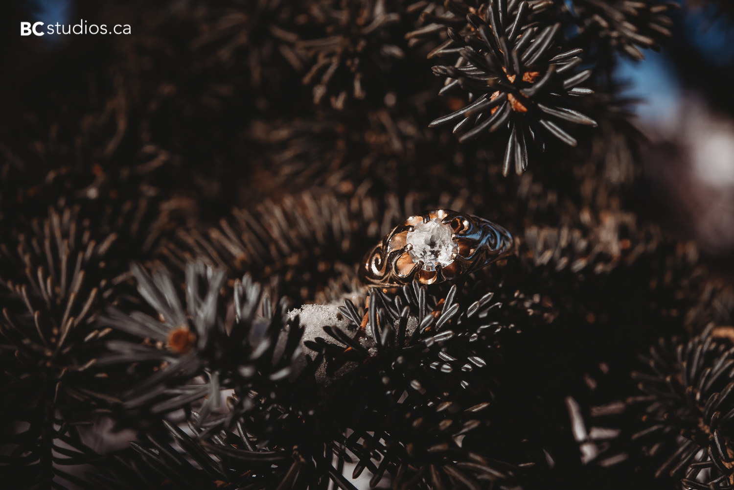 whitemud park engagement ring photo with pines
