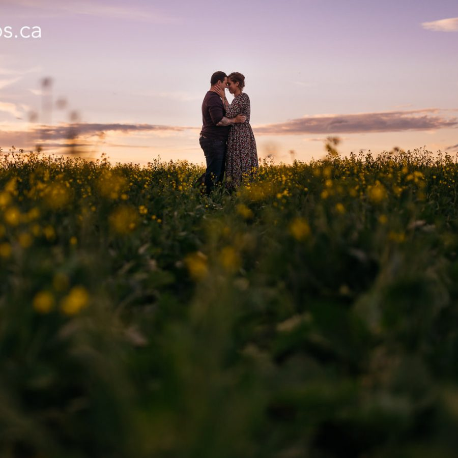 lea-engagement-session-edmonton-engagement-photographer-rural-alberta-dandelions-engagement-photos-24-of-33